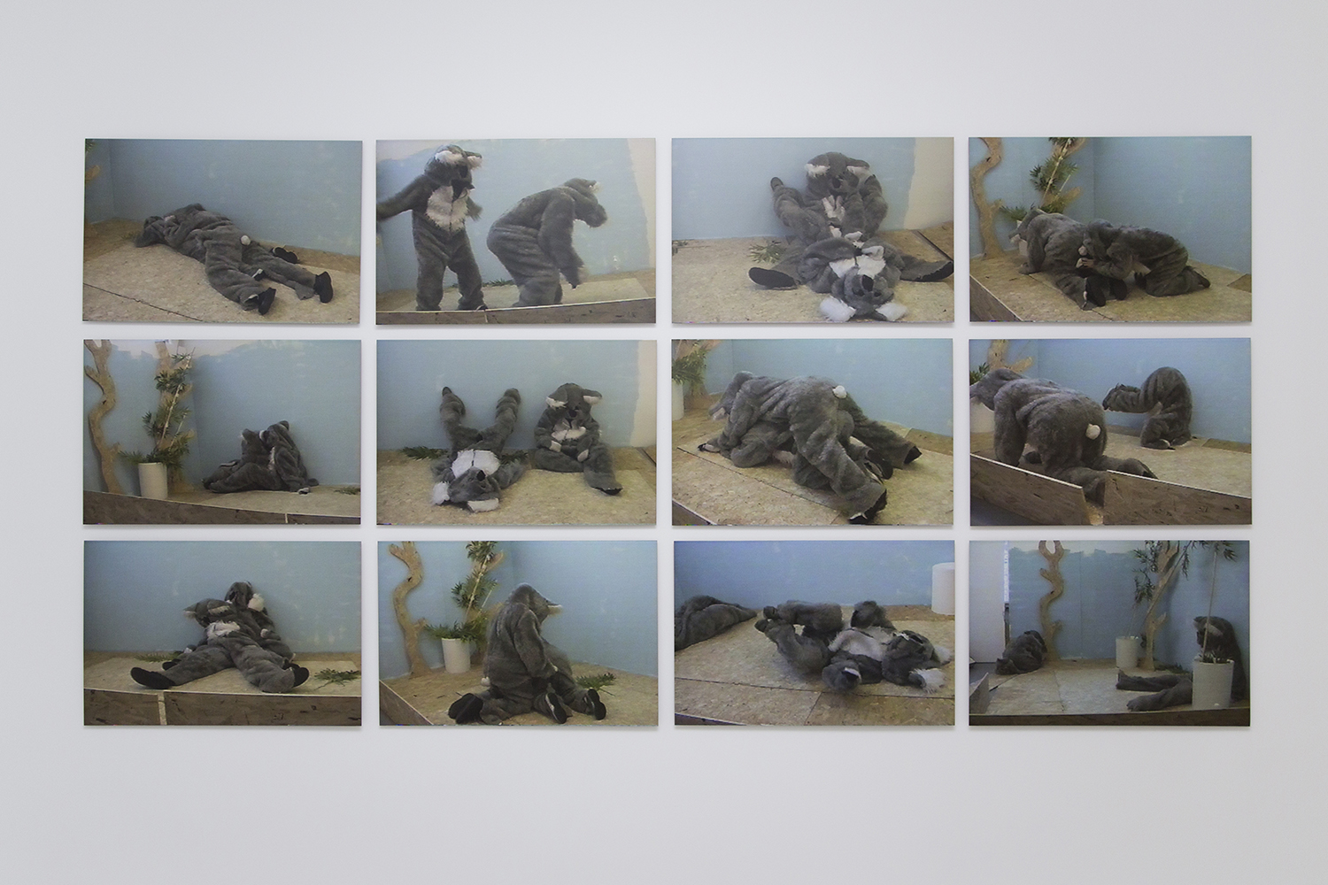 Kathy Temin, 'Auditions for a pair of Koalas(2002)',   24 x digital prints mounted on aluminium